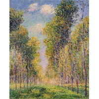 Alley of Poplars