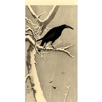 Crow on a Snowy Branch