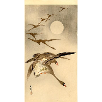 Eight White-fronted Geese in Flight; full Moon behind
