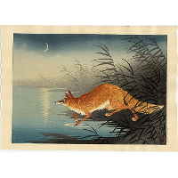 Fox in the reeds