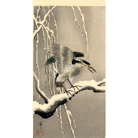 Night Heron on a Snowy Branch