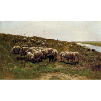 Sheep on a dyke