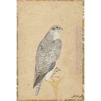 Portrait of a Falcon from Northern India