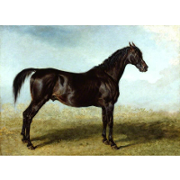 'Guy Mannering', A Race Horse