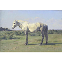 A Grey Horse in a Field
