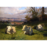 Cows Resting