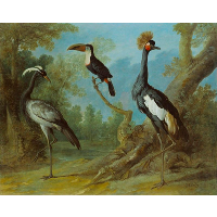 Demoiselle Crane, Toucan, and Tufted Crane