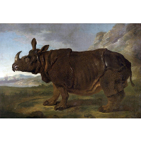 Clara the Rhinoceros