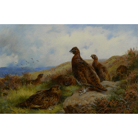 Red Grouse Packing