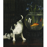 Japanese Chin and Goldfish
