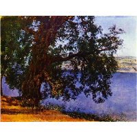 A Tree over Water in the Vicinity of Castel Gandolfo